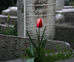 ottoman and tulip image
