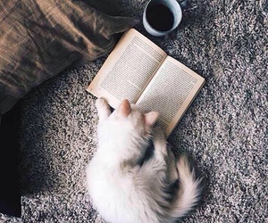 cat, book, and coffee image