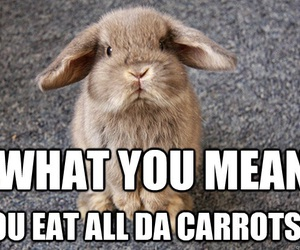 bunny memes and cute image