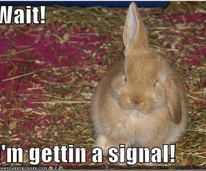 funny and rabbit image