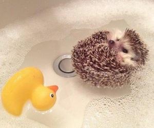 bath, duck, and hedgehog image