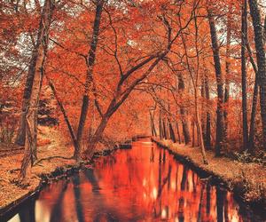 autumn, orange, and fall image