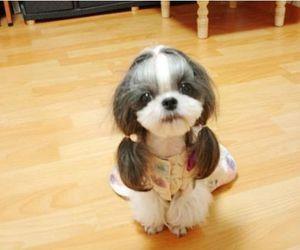 *-*, dog, and lady image