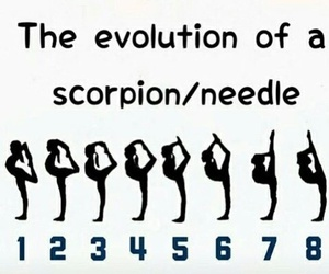 scorpion, needle, and fitness image