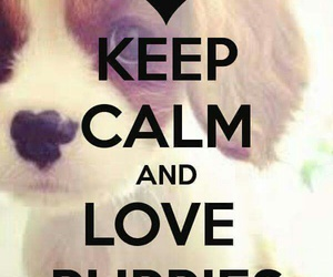 puppies and keep calm image