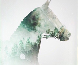 horse, Animales, and love image