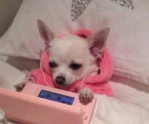 pink, dog, and animal image