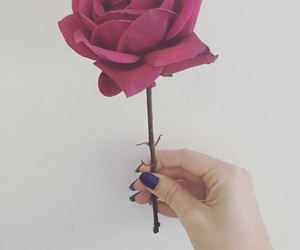beauty, flower, and hand image