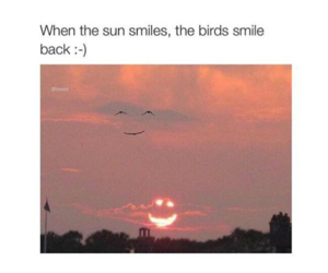 birds, lol, and smile image