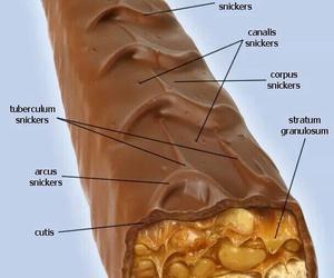 anatomy, funny, and joke image