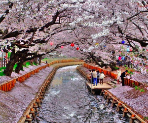 japan, flowers, and tree image