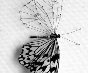 butterfly, black and white, and art image