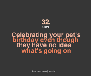 Birthday And Pet Image