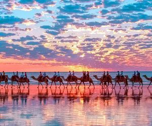 camel, sunset, and beach image