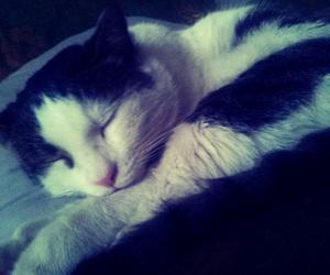 animals, i love him, and cat image