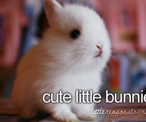 bunny, animal, and little reasons to smile image