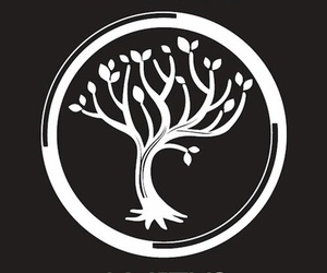 amity, divergent, and book image