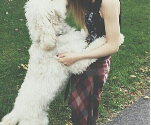 dog, against the current, and chrissy costanza image