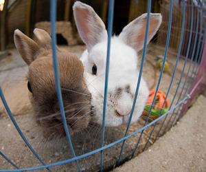 rabbit, cute, and animal image