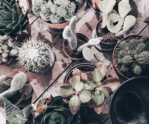 cactus, cactuses, and green image