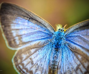 butterfly, blue, and macro image