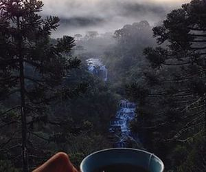 nature, tea, and forest image