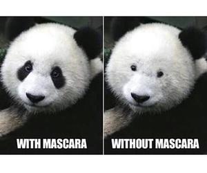 panda, funny, and mascara image
