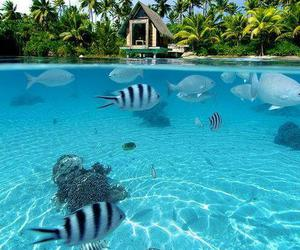 fish, blue, and summer image