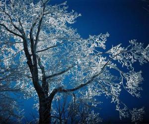 inverno, snow, and tree image