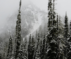 nature, winter, and snow image