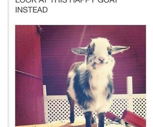 goat, happy, and cute image
