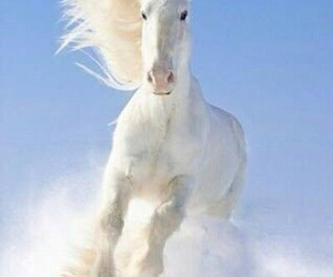 horse, awesome, and white image