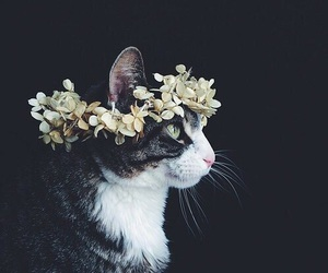 aww, cat, and sweet image