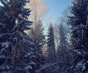 cold, forest, and nature image