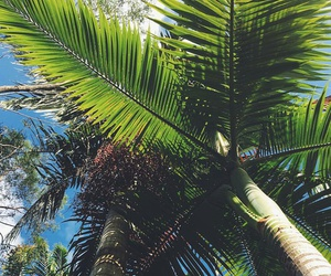 green, holidays, and palm image