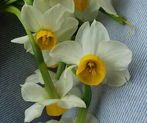 flower, narcissus, and winter image