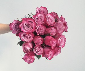 roses, pink, and cute image