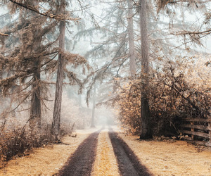 nature, travel, and trees image