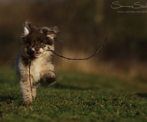 dog, puppy, and stick image