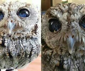 blind, Zeus, and owl image