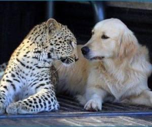 dog, love, and animals image