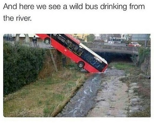 bus, drinking, and funny image