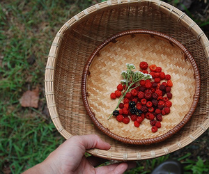 basket, fruit, and photography image