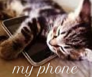 animals, kitty, and cute image