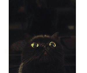 beautiful, big eyes, and black image