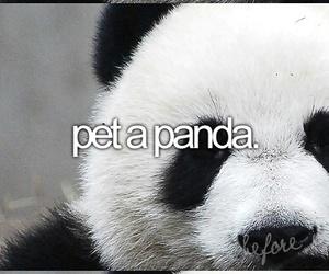 panda, before i die, and pet image