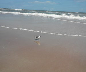 sand, seagull, and surf image