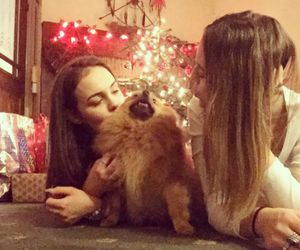 animal, blonde, and dog image