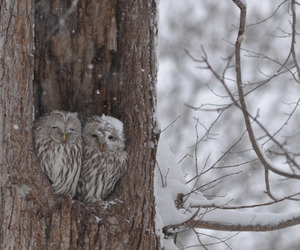 owls, love, and animals image