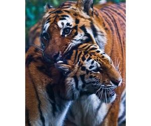 jaguar, lion, and tiger image